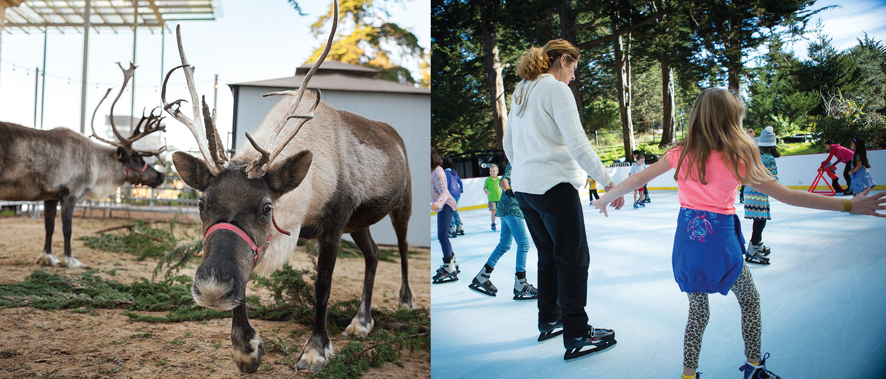 Left: Reindeer are seen at the California Academy of Sciences on Dec. 5, 2013.Right: Children skate around the new ice rink at the academy on Nov. 21. (Courtesy Kathryn Whitney/California Academy of Sciences)