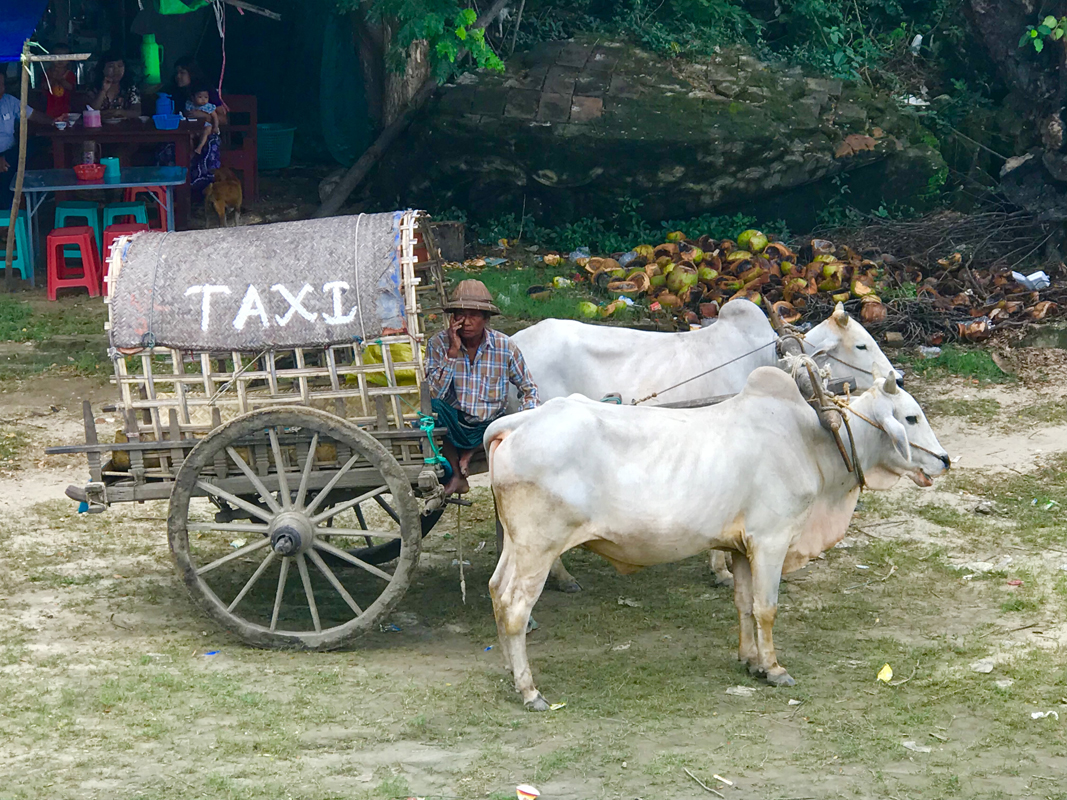 A taxi pulled by Brahman bulls in Mingun. (Julie L. Kessler/Special to S.F. Examiner)