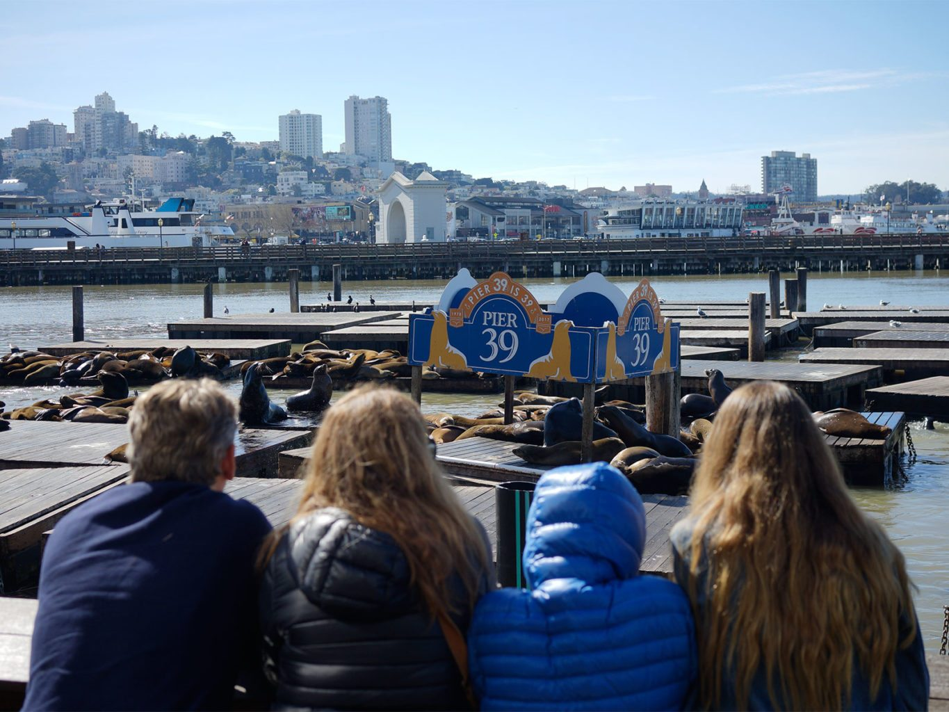 A family watches dozens of sunbathing sea lions in February at San Francisco's Pier 39. The beloved destination on The Embarcadero turns 39 this year. (James Chan/Special to S.F. Examiner)