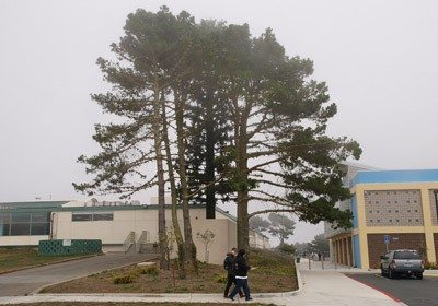 Mike Koozmin/The SF ExaminerThe cellphone tower at Westmoor High School in Daly City is disguised as a large tree