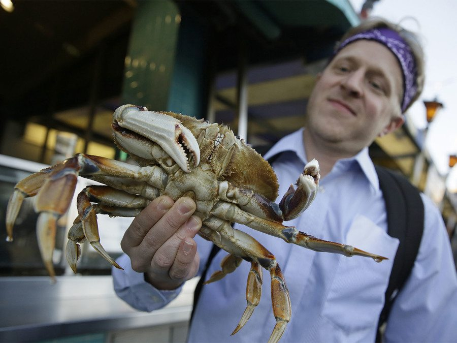 In this photo taken Tuesday, Nov. 10, 2015, Michael Bair, of Lexington, Ky., holds a Dungeness crab imported from the Northwest at Fisherman's Wharf in San Francisco on Nov. 10, 2015. (Eric Risberg/AP)