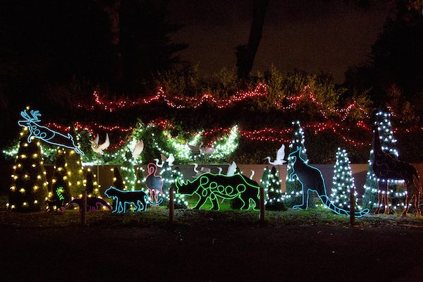 The San Francisco Zoo begins its holiday show, which lights up the playground, reindeer. koalas, giraffes and amphibians and reptiles. (Courtesy photo)