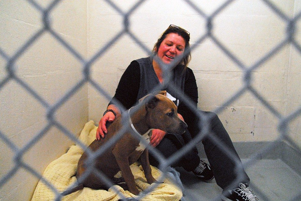 Evan DuCharme/S.F. Examiner file photoA volunteer works with a dog up for adoption at Animal Care and Control.