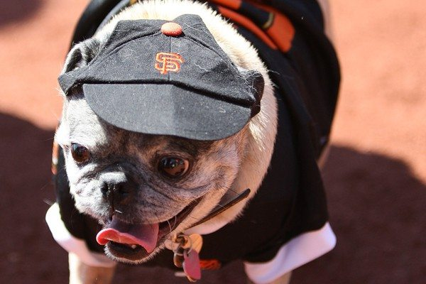 Pet insurer says Giants will be barking all the way to the title