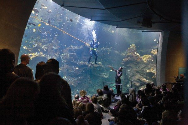 Courtesy photoDivers plunge into Steinhart Aquarium's Philippine Coral Reef every day at 11:30 a.m. and 2:30 p.m.