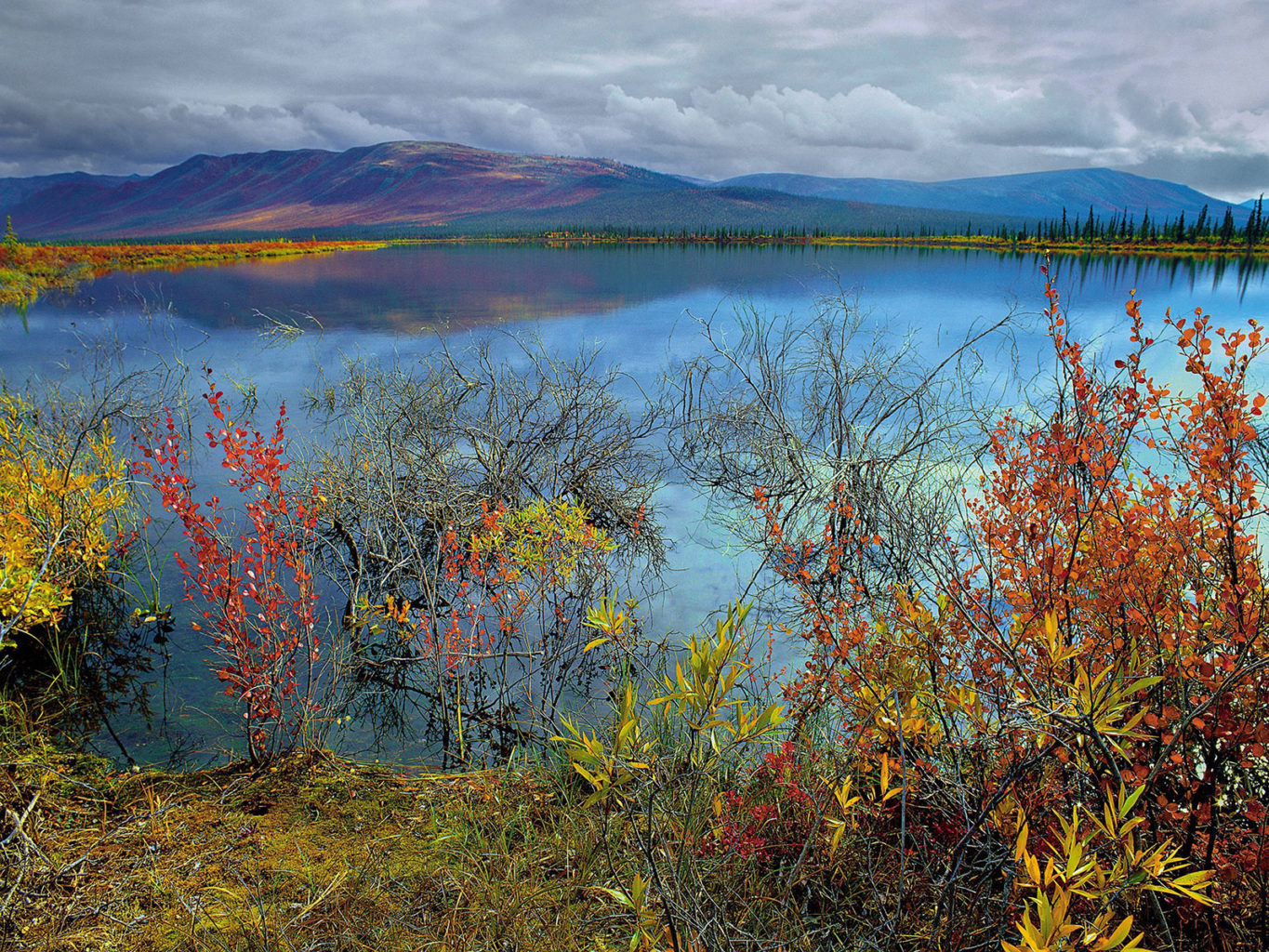 The Arctic National Wildlife Refuge in Alaska is in danger of being opened to oil and gas drilling.(Subhankar Banerjee/Seattle Times/TNS)