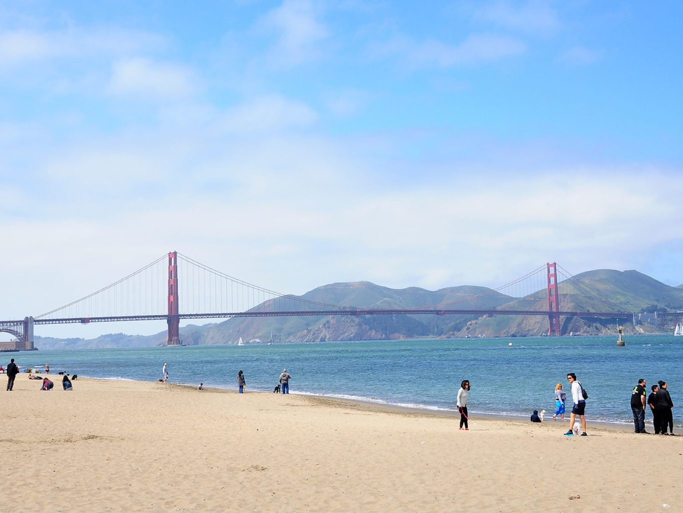 If city leaders stand for unlimited dog access on San Francisco beaches, they should also look for other ways to limit threats facing our coasts. (Courtesy photo)