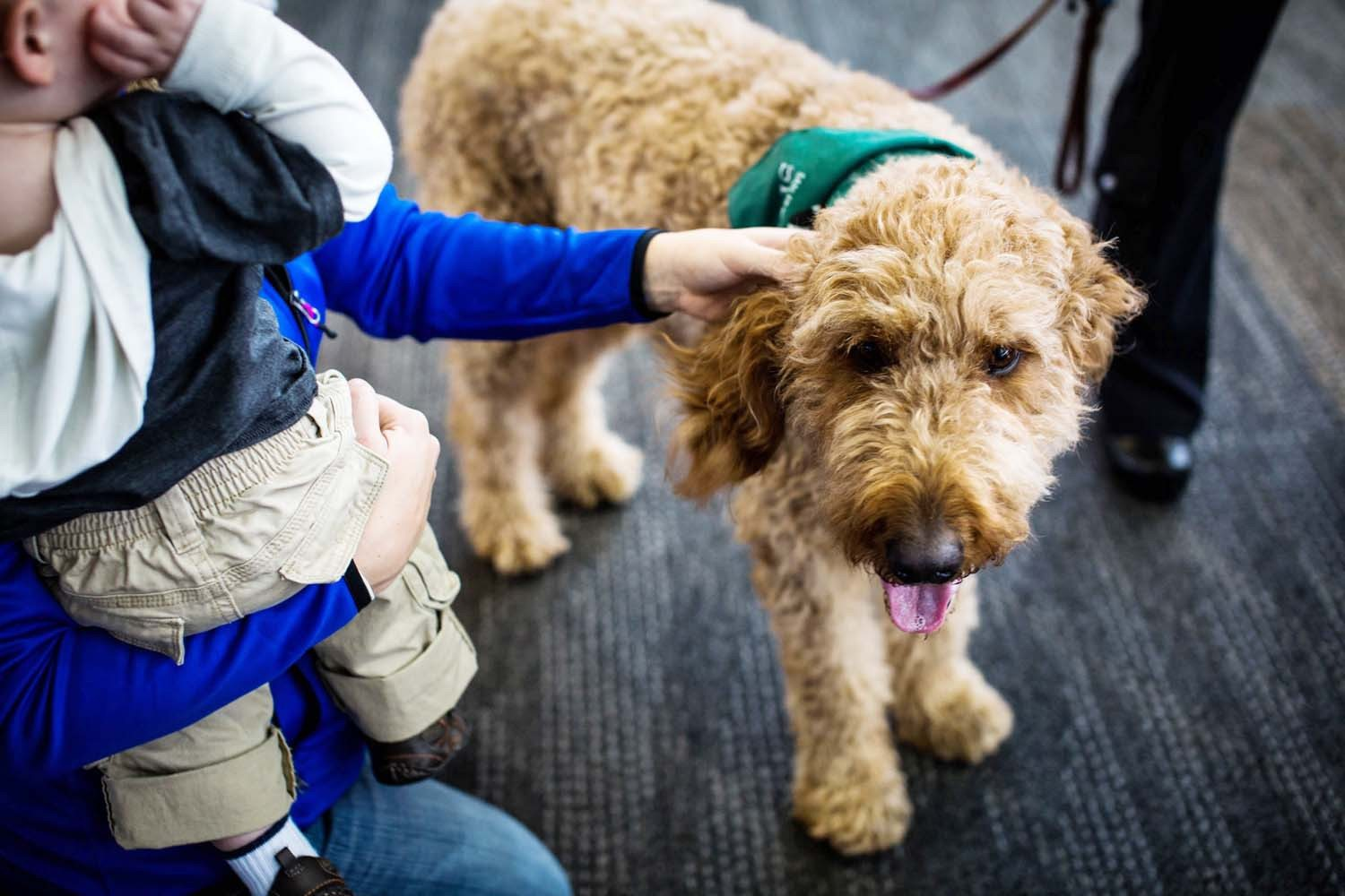 Courtesy photoSFO is teaming with the San Francisco SPCA on the new Wag Brigade program. Eight dogs from the SPCA's Animal Assisted Therapy Program will pay visits to SFO terminals along with their volunteer walkers