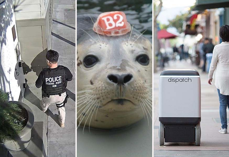 Top stories of the week: Emergency immigration hotline, seal pupping season, delivery robots