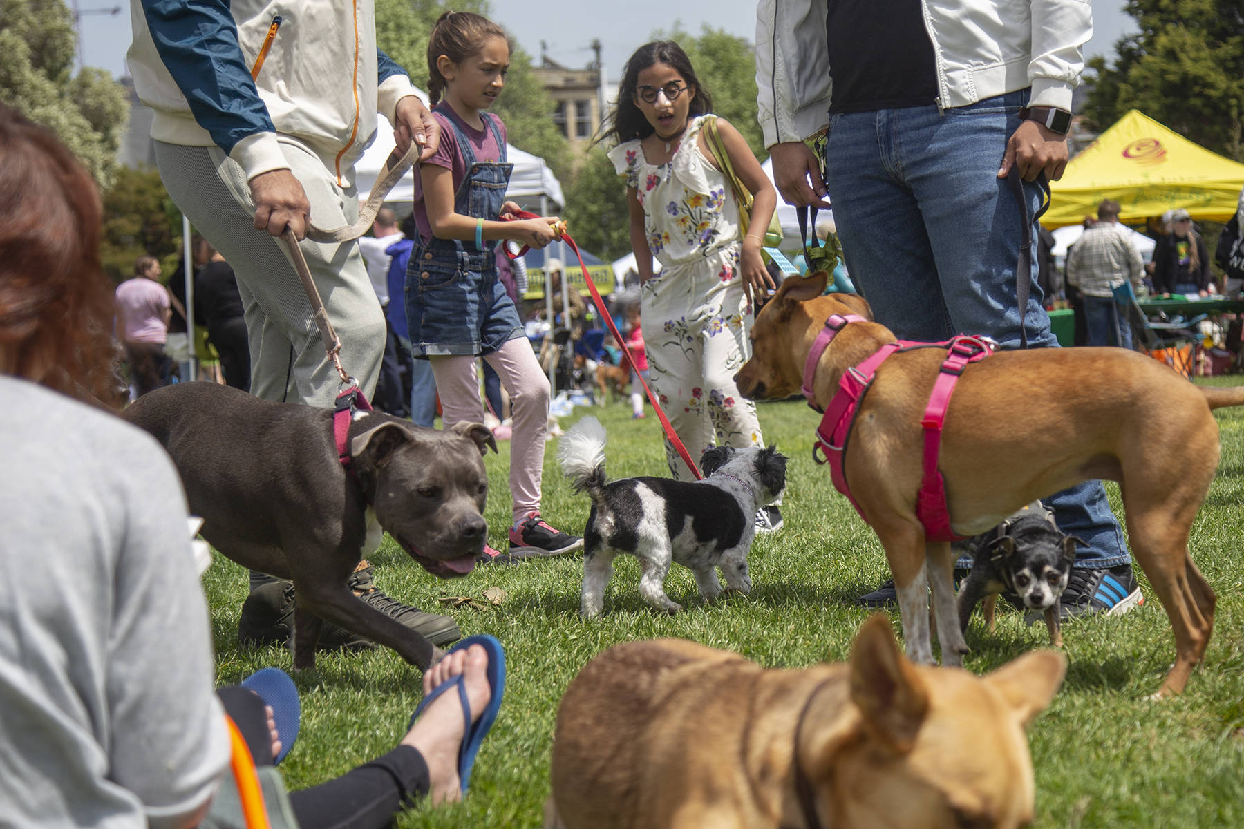 Two students meeting several dogs at the 12th annual Dogfest, a benefit event for McKinley Elementary School, in Duboce Park on Saturday, April 27, 2019. (Ellie Doyen/Special to S.F. Examiner)