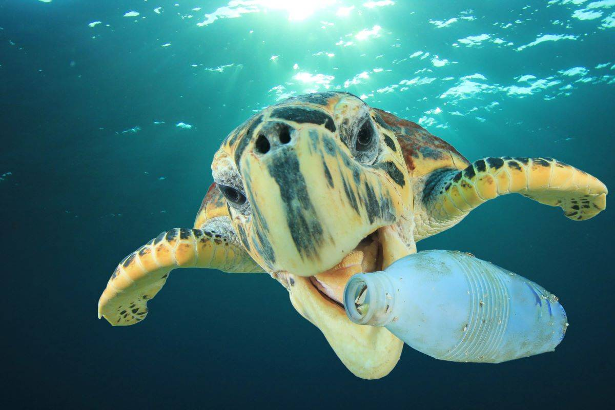 Sea turtles and other marine wildlife, sadly, are eating plastic bottles. (Courtesy Rich Carey/Shutterstock)