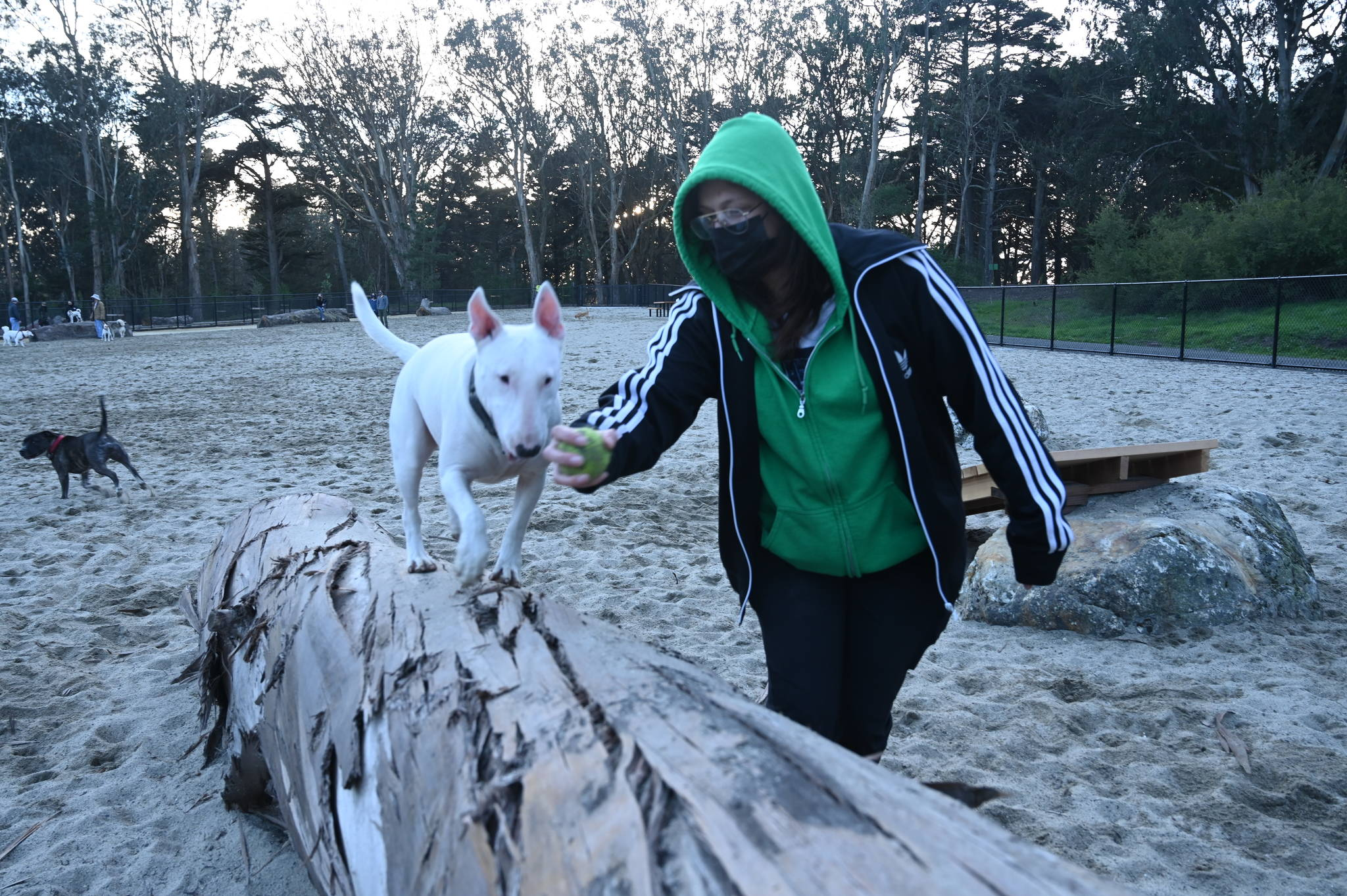 Delia A. and her dog, Dizzy, climb on trees installed in the renovated the Golden Gate Dog Training Area at Golden Gate Park. (Samantha Laurey/Special to SF Examiner)